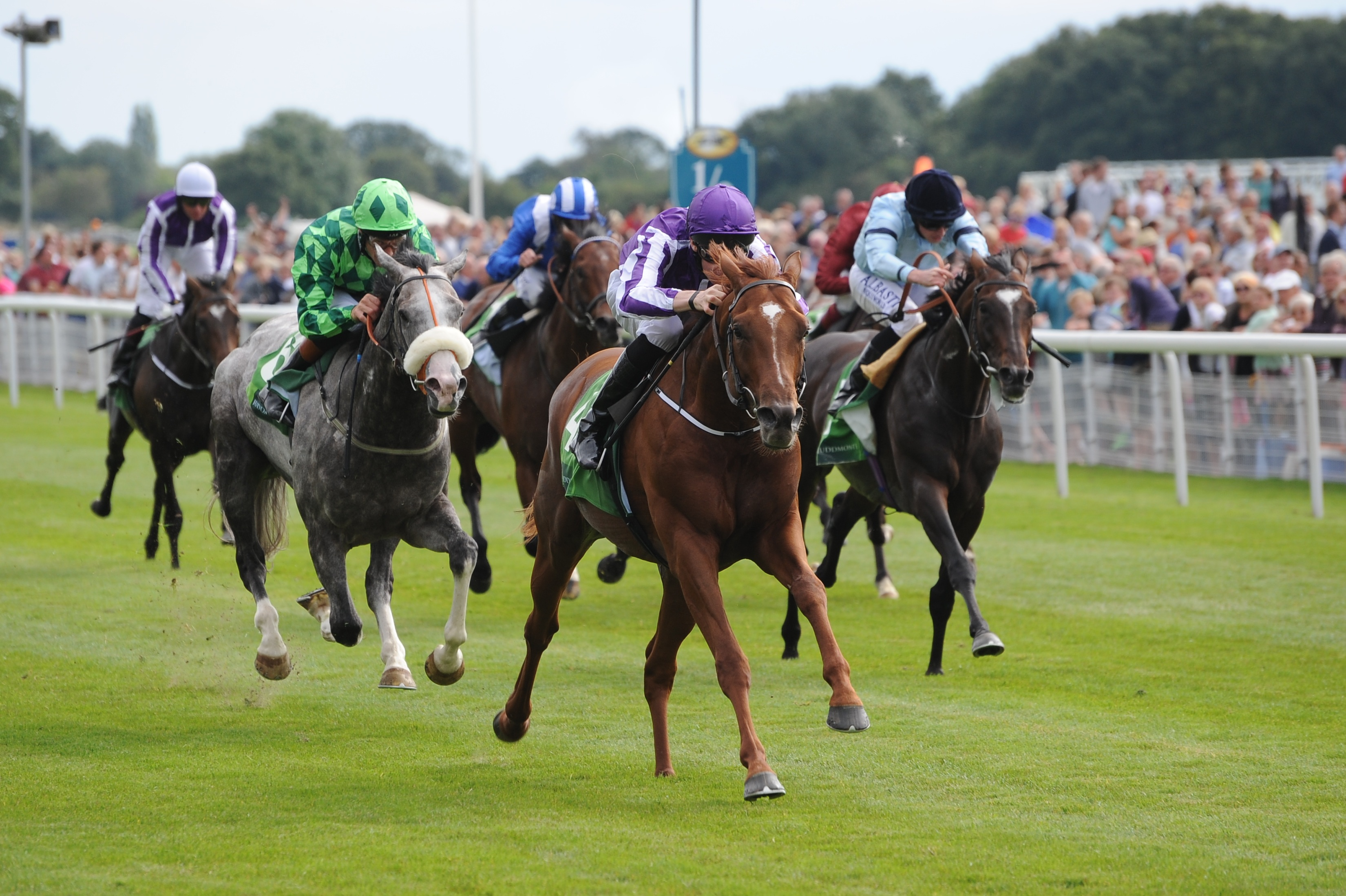 Image result for york races